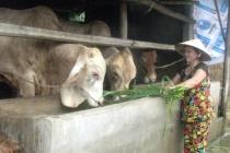 Hội Liên hiệp Phụ nữ phường Cự Khối- Long Biên: Thực hiện hiệu quả chính sách tín dụng, giúp hội viên thoát nghèo