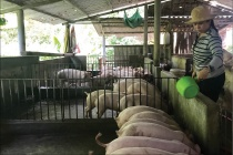 Hội LHPN xã Quảng Thái: Hỗ trợ hội viên nghèo phát triển kinh tế gia đình