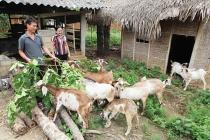 Thái Nguyên phấn đấu đưa tỷ lệ hộ nghèo xuống còn 9%