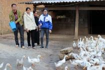 Yên Bái: Đồng bào dân tộc thiểu số vươn lên thoát nghèo
