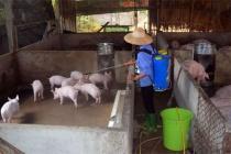 Tìm hướng đi phát triển kinh tế gia đình từ việc thử nuôi lợn