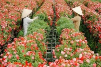 Đồng Tháp: Phát triển làng nghề để giải quyết việc làm cho người lao động