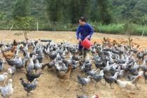 Huyện Hà Quảng- Cao Bằng: Thực hiện hiệu quả các giải pháp giảm nghèo bền vững