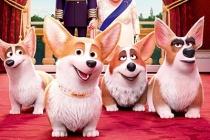 The Queen's Corgi – Những chú chó Hoàng gia