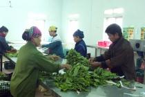 Những nỗ lực trong giải quyết việc làm ở Lâm Thao