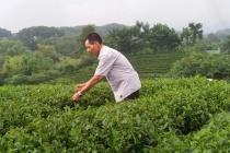 Hiệu quả sử dụng vốn vay giải quyết việc làm ở Thái Nguyên