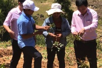 Kon Tum tích cực thực hiện tín dụng chính sách xã hội để  giảm nghèo bền vững