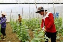 Lào Cai: Quan tâm giải quyết việc làm cho thanh niên dân tộc thiểu số