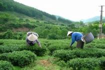Tín dụng chính sách hỗ trợ giảm nghèo ở Lạng Sơn