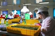 Bắc Ninh hỗ trợ việc làm cho thanh niên nông thôn
