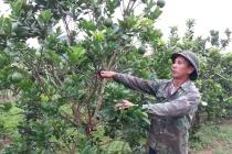 Huyện Lục Ngạn: Nỗ lực giảm nghèo bền vững