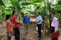 Quảng Bình: Hiệu quả chương trình vay vốn giải quyết việc làm