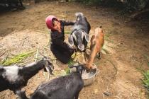 Câu chuyện thành công của một số mô hình hỗ trợ giảm nghèo cho đồng bào dân tộc thiểu số ở Tây Nguyên