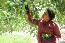 Vốn vay hỗ trợ giải quyết việc làm, đảm bảo an sinh xã hội ở Ninh Thuận