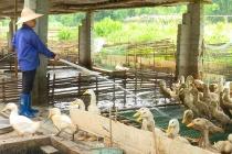 Ngân Sơn đào tạo nghề cho lao động nông thôn gắn với giảm nghèo bền vững