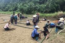 Bắc Kạn đào tạo nghề cho 10.400 lao động nông thôn
