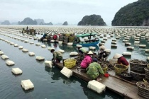 Huyện Vân Đồn: Đào tạo nghề cho lao động nông thôn góp phần giải quyết việc làm, tăng thu nhập cho người lao động