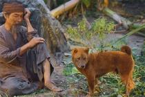 Cậu Vàng - Chú chó đảm nhận vai chính đầu tiên trên phim điện ảnh Việt