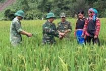 Lai Châu hoàn thành việc hỗ trợ gạo đến các hộ bị đói giáp hạt