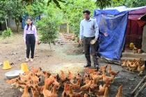 Thị xã Ba Đồn: Nỗ lực giải quyết việc làm cho lao động nông thôn