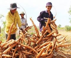 Huy động nguồn lực giúp đồng bào thiểu số ở Ninh Thuận thoát nghèo