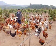 Hà Nội: Giải bài toán cho hội viên hộ phụ nữ nghèo vay vốn từ Quỹ Quốc gia giải quyết việc làm