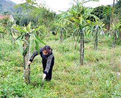 Hoành Bồ - điểm sáng trong công tác giảm nghèo ở Quảng Ninh