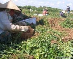 Đề án 1956 góp phần chuyển dịch cơ cấu lao động ở Ý Yên