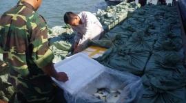 Hàng chục nghìn con cá giống, cá cảnh ồ ạt nhập lậu về Việt Nam