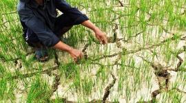 Xác định các giải pháp chiến lược phát triển Đồng bằng sông Cửu Long