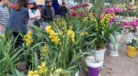 Hình ảnh: Chợ hoa Hà Nội tấp nập chiều 29 Tết