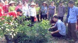 Lao động phi nông nghiệp ở Yên Lập có mức lương đạt 3,5 triệu đồng