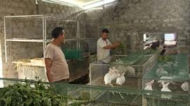 Thanh Hóa: Những nỗ lực trong công tác giảm nghèo ở các huyện miền núi