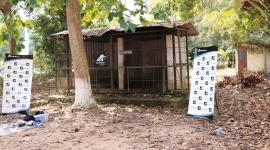 Tổ chức động vật châu Á cứu hộ gấu chó sau 15 năm nuôi nhốt tại Tây Ninh