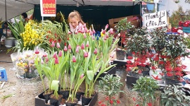 Đào, quất giảm giá trong phiên chợ Tết cuối năm