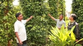 Đắk Lắk: Nhiều kết quả đáng ghi nhận trong công tác giảm nghèo