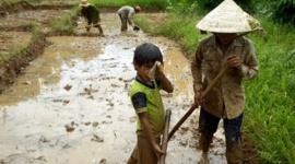 Cần có hành lang pháp lý quy định đầy đủ về vấn đề lao động trẻ em
