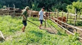 Nỗ lực giảm nghèo vùng đặc biệt khó khăn