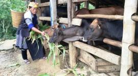 Yên Bái: Gần 6.000 tỷ đồng thực hiện chính sách giảm nghèo năm 2020