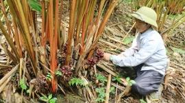 Xã Chiềng Công (Sơn La) nỗ lực giảm nghèo, nâng cao đời sống người dân