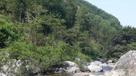 Huyện Minh Long: Mô hình cựu chiến binh phát triển và bảo vệ rừng