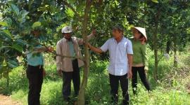 Hiệu quả đưa nghị quyết vào cuộc sống ở Đảng bộ  Huyện Định Quán