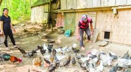 Xóa đói giảm nghèo ở miền Tây xứ Nghệ