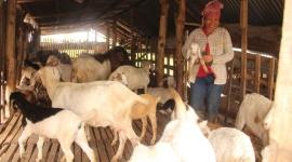 Đồng Nai: Mô hình nuôi dê giúp nhiều hộ dân vươn lên thoát nghèo