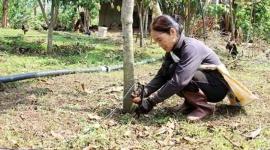 Huyện Bắc Yên (Sơn La): Nỗ lực giảm nghèo nhanh và bền vững