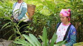 Sơn La triển khai nhiều mô hình, dự án nhằm thực hiện mục tiêu giảm nghèo bền vững