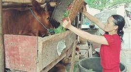 Hà Giang huy động nguồn lực thực hiện mục tiêu giảm nghèo bền vững