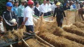Đắk Lắk: Nhân rộng nhiều mô hình đào tạo nghề cho lao động nông thôn
