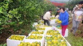 Giảm nghèo sâu và thực chất ở huyện miền núi Lục Ngạn