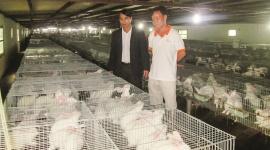 Nam Định: Vốn hỗ trợ tạo việc làm giúp chuyển hướng sản xuất hàng hóa ở nông thôn